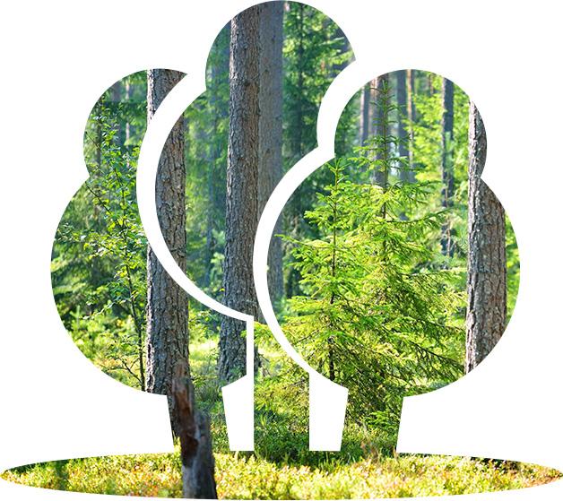 varejoki-puut